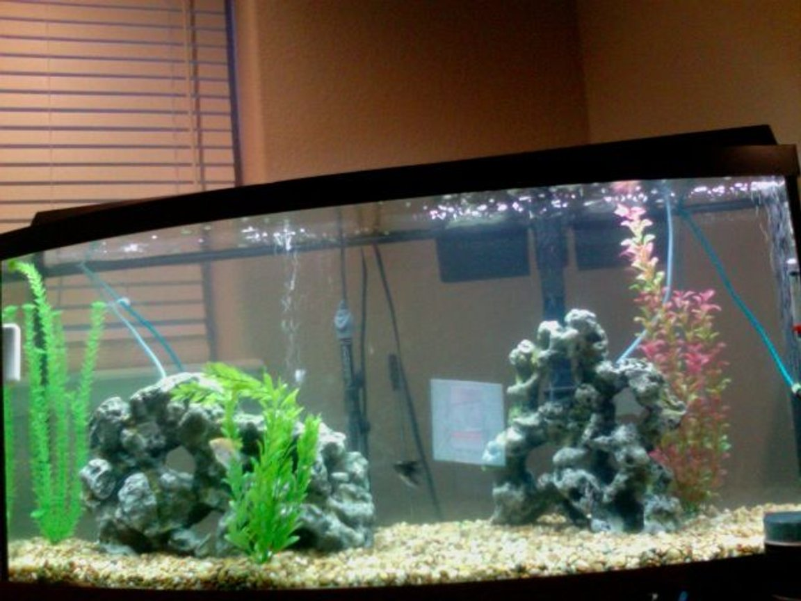 75 gallons freshwater fish tank (mostly fish and non-living decorations) - newest photo...not a great one though.