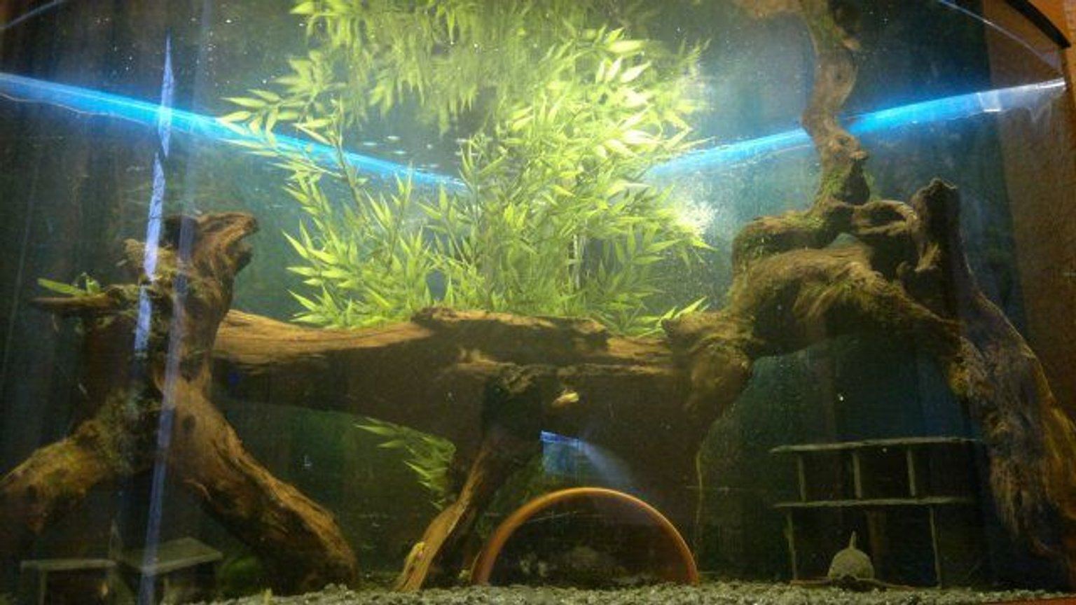 42 gallons freshwater fish tank (mostly fish and non-living decorations) - W.I.P