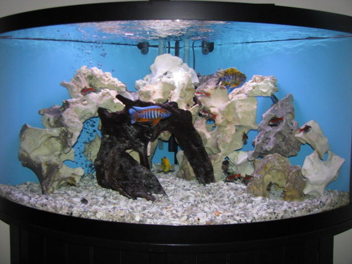 92 gallons freshwater fish tank (mostly fish and non-living decorations) - Updated tank and added a few more fish.