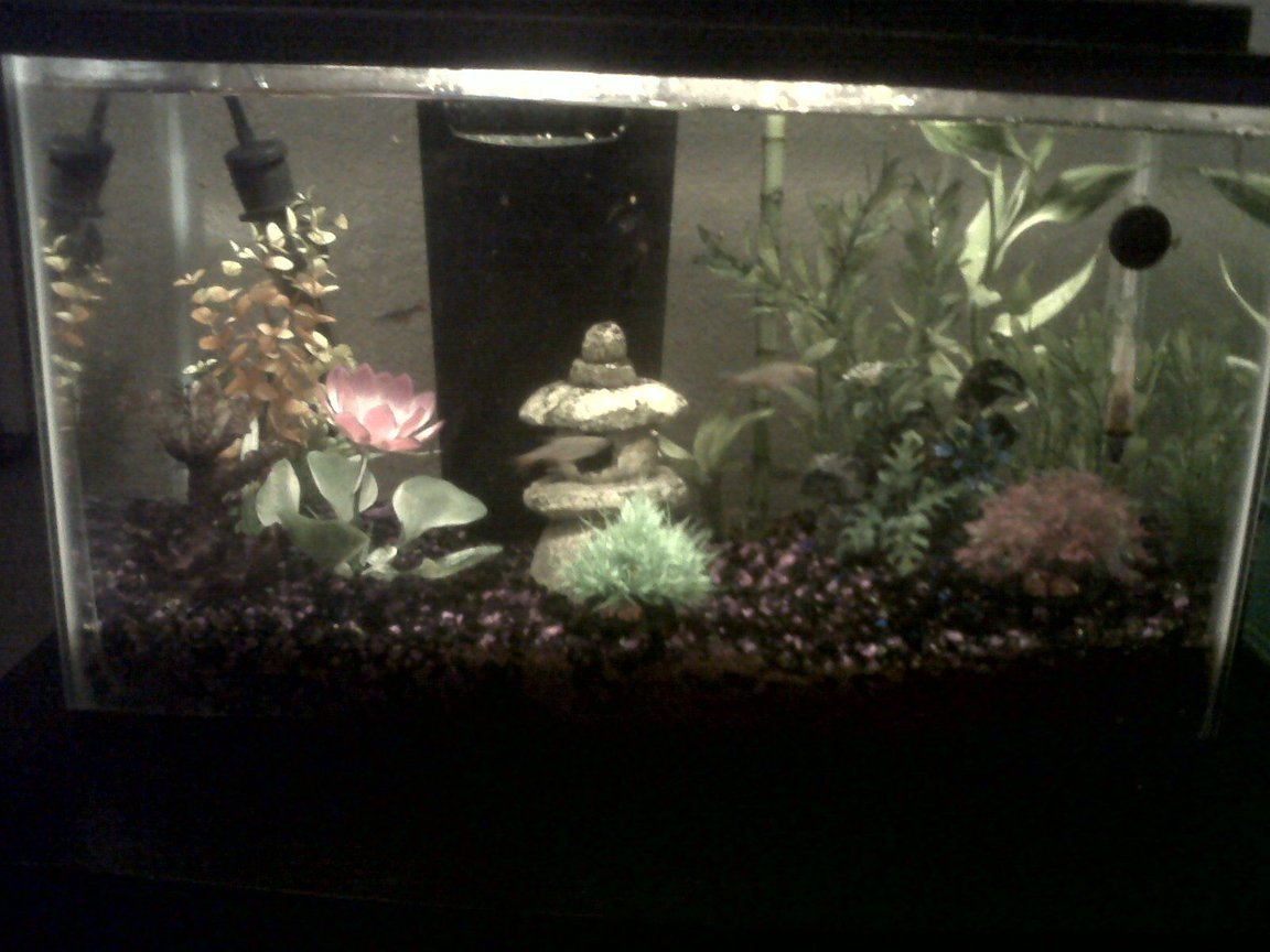 10 gallons freshwater fish tank (mostly fish and non-living decorations) - 10 gallon freshwater tropical community tank.