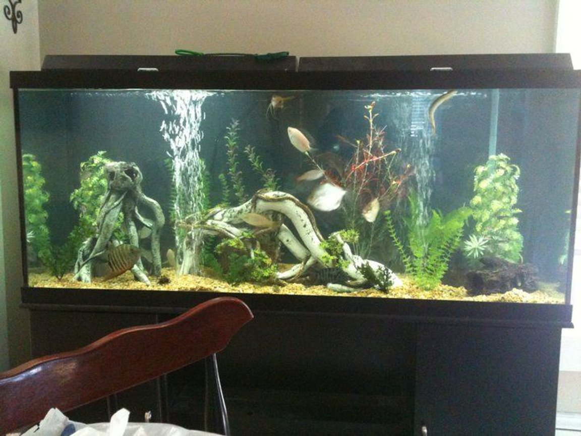 120 gallons freshwater fish tank (mostly fish and non-living decorations) - Just redecorated it. Its still a tad cloudy, but its looking good.