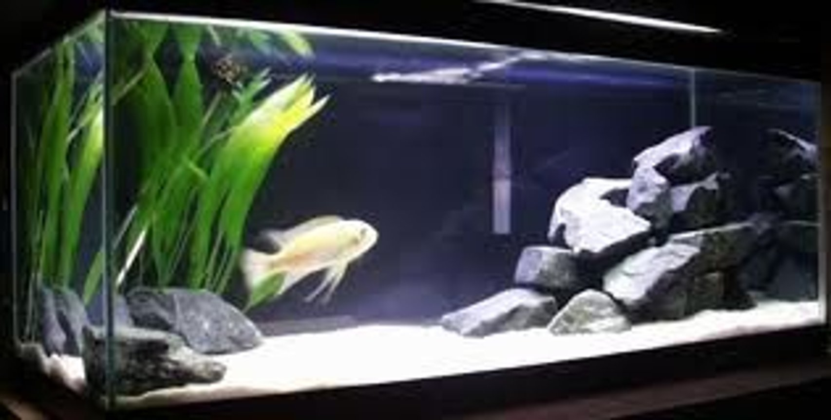 20 gallons freshwater fish tank (mostly fish and non-living decorations) - this is one of my son tank