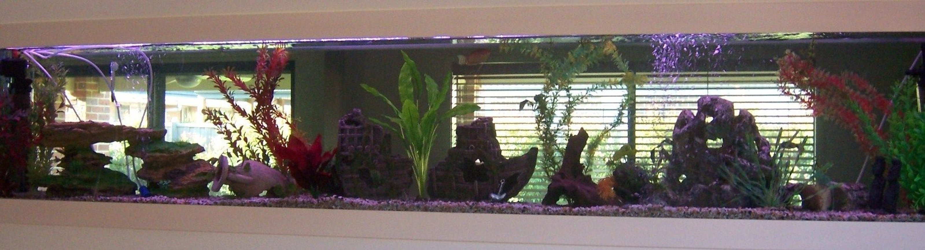 70 gallons freshwater fish tank (mostly fish and non-living decorations) - my 8ft in wall tank!