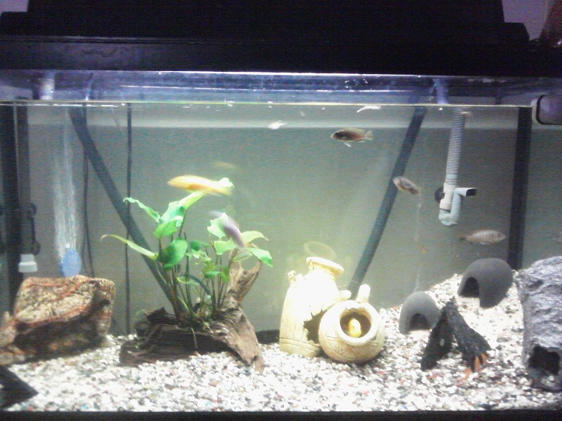 55 gallons freshwater fish tank (mostly fish and non-living decorations) - 1 year old