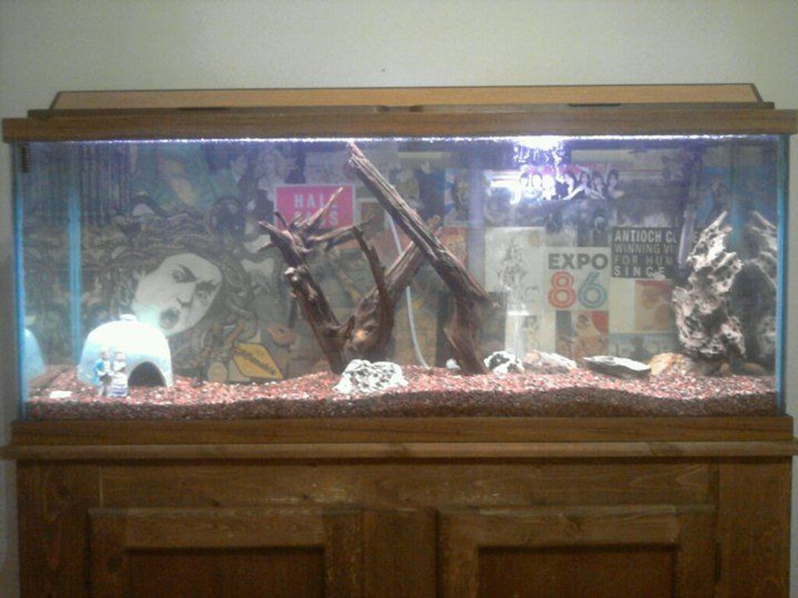 55 gallons freshwater fish tank (mostly fish and non-living decorations) - Lights on. Not glamorous, but not exactly fugly for a hand-me-down tank...