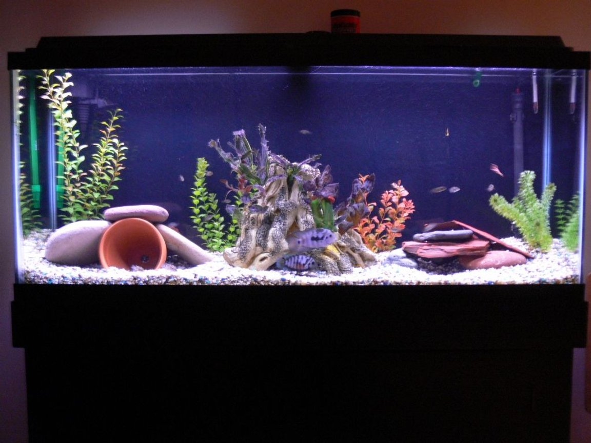 55 gallons freshwater fish tank (mostly fish and non-living decorations) - 55 gal freshwater tank.