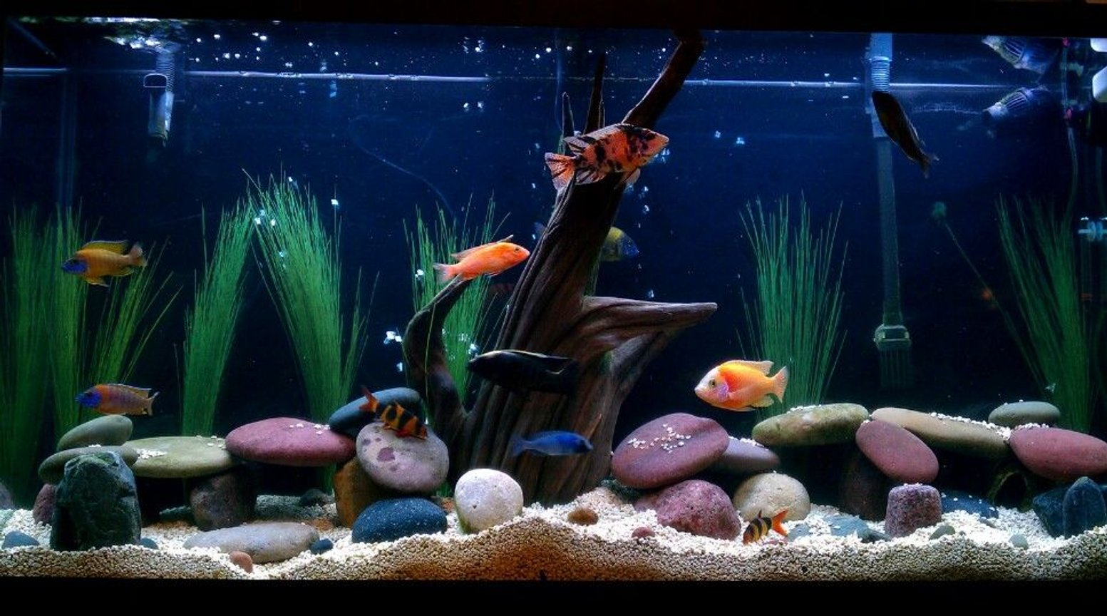 60 gallons freshwater fish tank (mostly fish and non-living decorations) - Lets see some good ratings! Come on! Haha