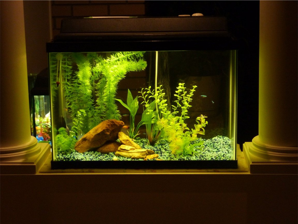 20 gallons freshwater fish tank (mostly fish and non-living decorations) - I made the mistake of buying a poor quality tank, filter, gravel, plants, everything. Believe me, I ended up spending way more than I could have if I'd started with the best.