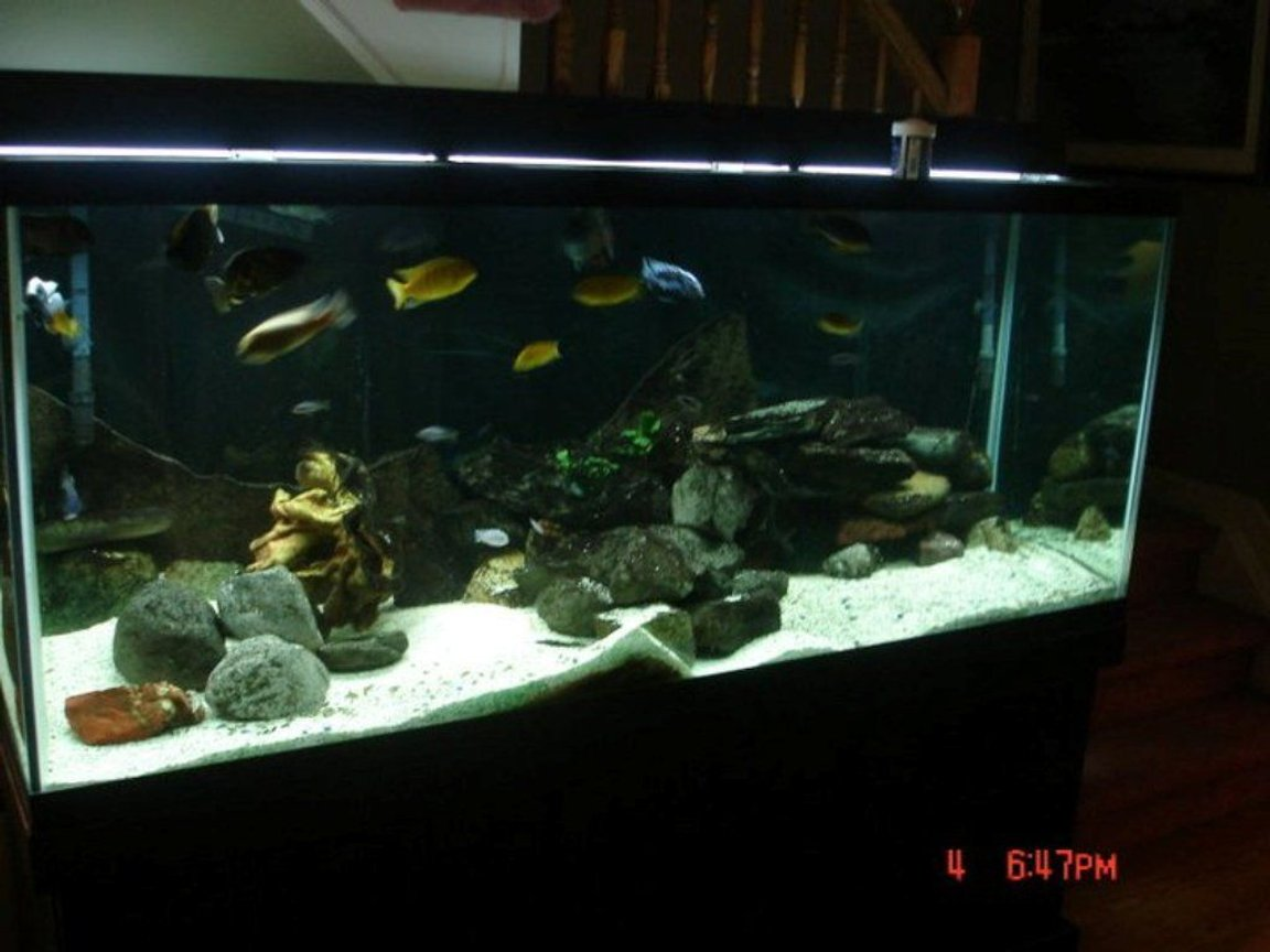 75 gallons freshwater fish tank (mostly fish and non-living decorations) - African cichlid tank 220g planted