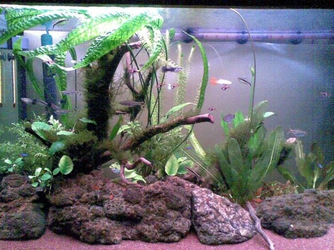 65 gallons freshwater fish tank (mostly fish and non-living decorations) - May 2011. Two months after initial setup. I installed a DIY yeast CO2 reactor 10 days ago.