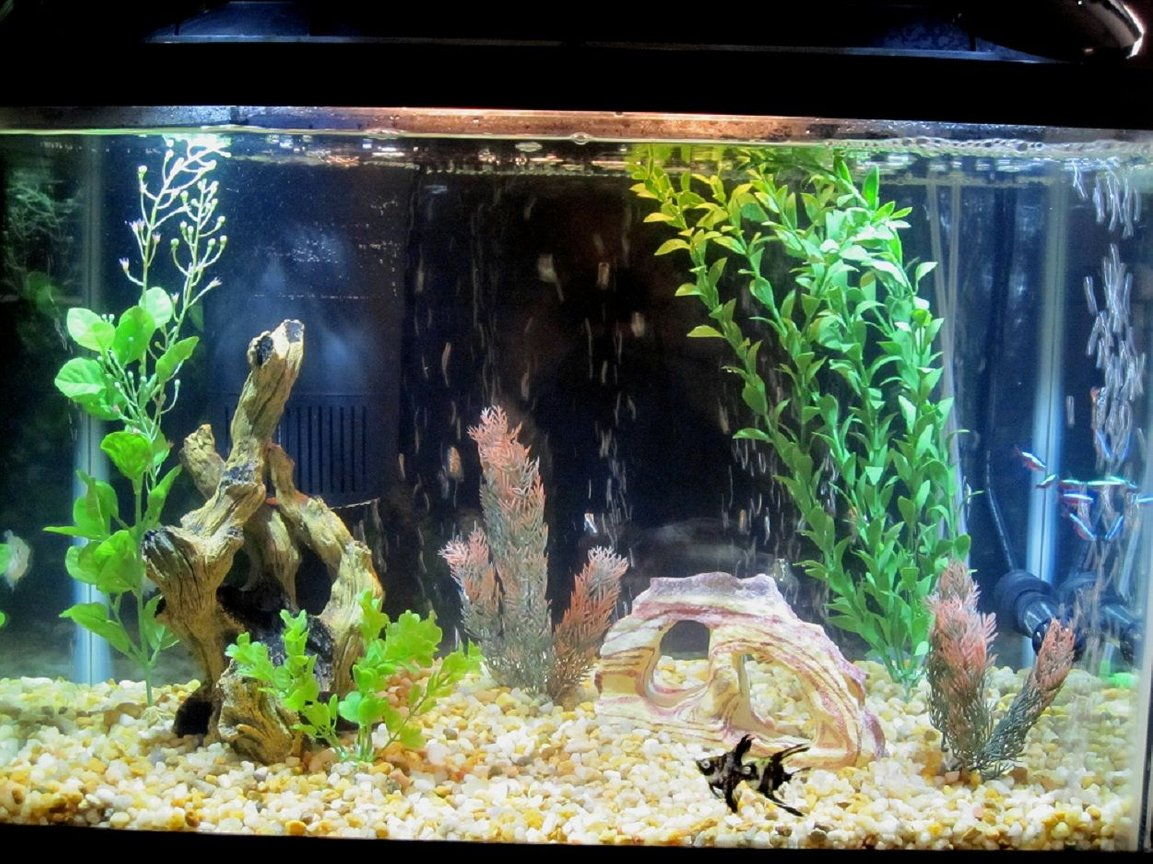 20 gallons freshwater fish tank (mostly fish and non-living decorations) - My Tropical Aquarium