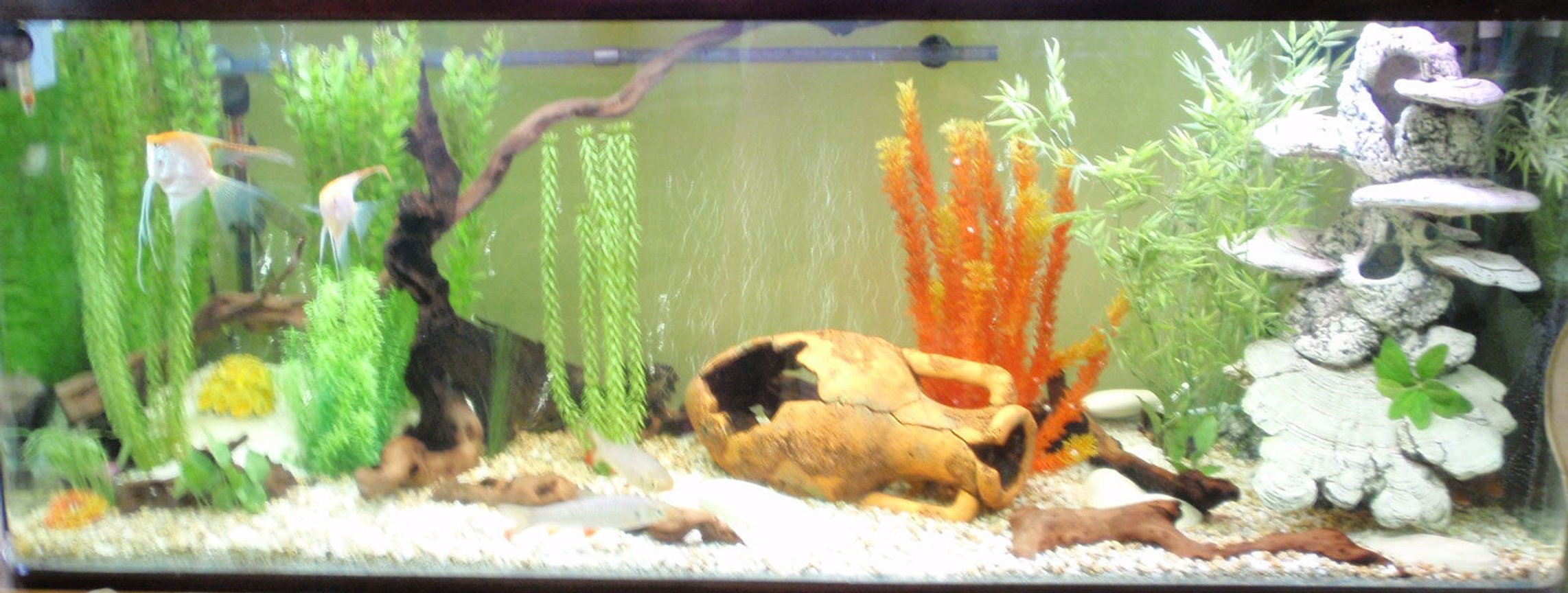 120 gallons freshwater fish tank (mostly fish and non-living decorations) - three days after redesign and most of decorations still in place - strange :)