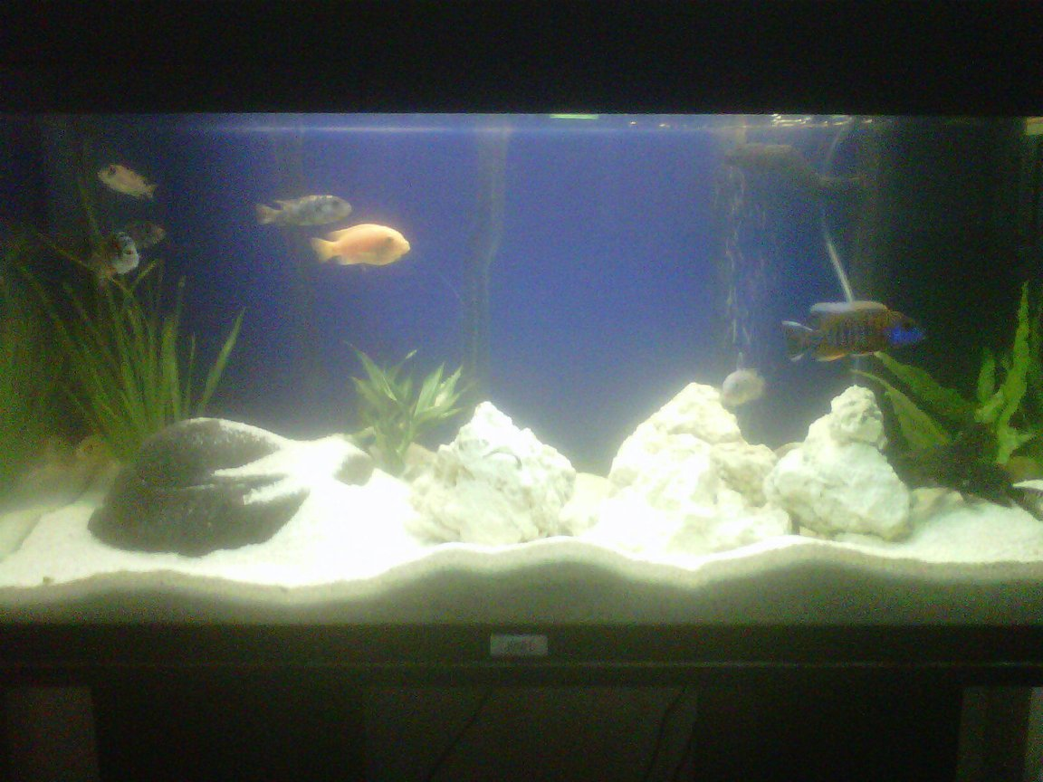 30 gallons freshwater fish tank (mostly fish and non-living decorations) - first malawi tank but i got the knowledge for it so its not like i ain't a stranger to it!!!
