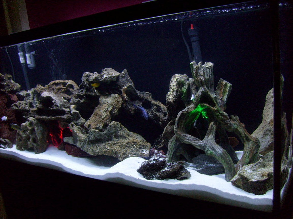 55 gallons freshwater fish tank (mostly fish and non-living decorations) - My 55 gal cichlid tank w/Lake Malawi cichlids...white sand...2 underwater lights...green and red. Lace Rock. Using a fluval 305 canister filter. An overhead dual coral life aquarium lite w/one blue bulb and one white bulb.