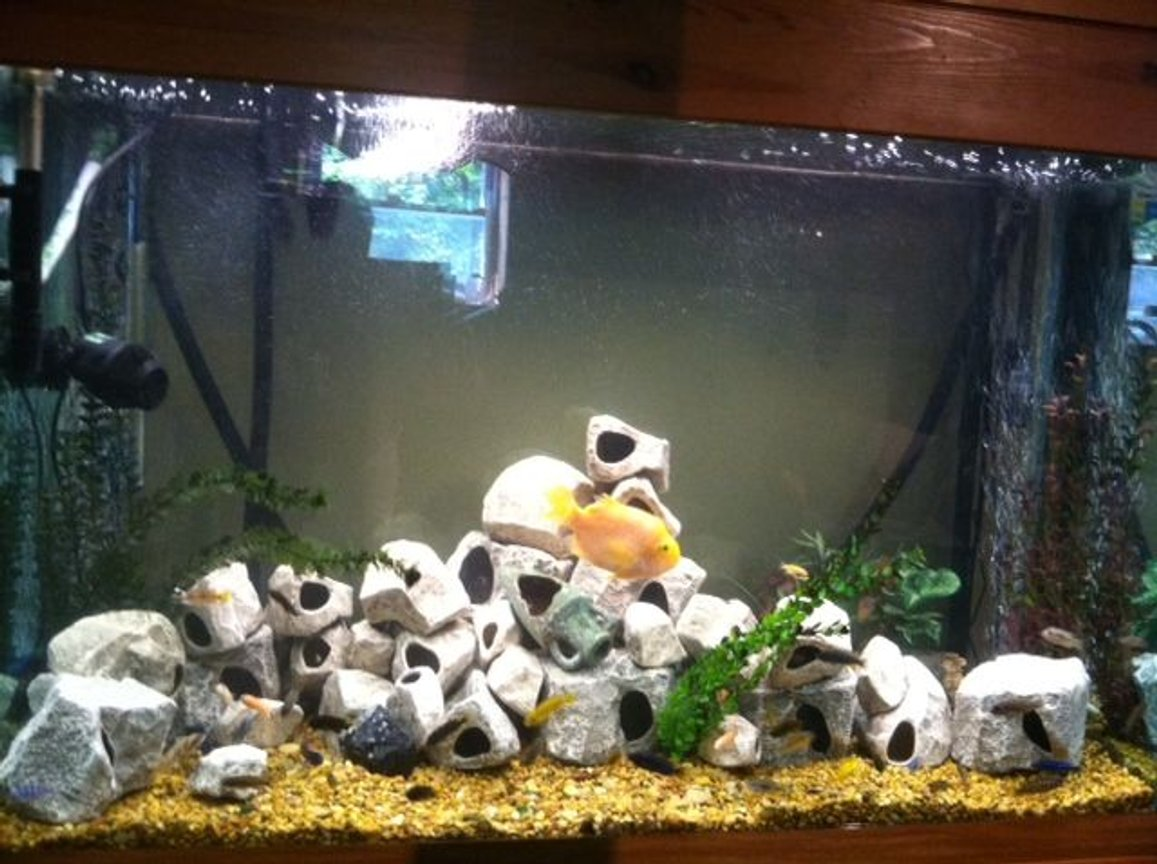 125 gallons freshwater fish tank (mostly fish and non-living decorations) - Tank redesigned, please look at my other photos of the tank to better rate it.
