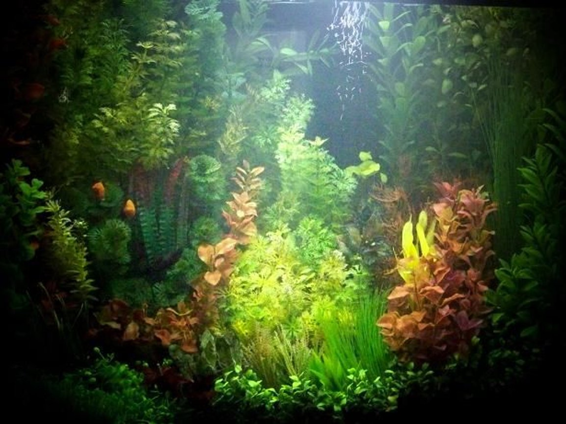 25 gallons freshwater fish tank (mostly fish and non-living decorations) - Well attired little cove