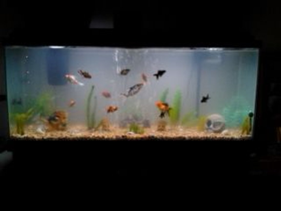 65 gallons freshwater fish tank (mostly fish and non-living decorations) - lots of fish in lots of plants