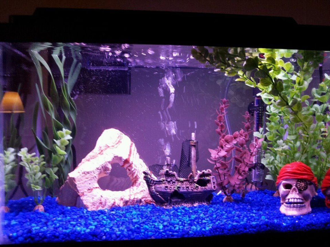 10 gallons freshwater fish tank (mostly fish and non-living decorations) - 10 gallon pirate theme with 5 tiger barbs