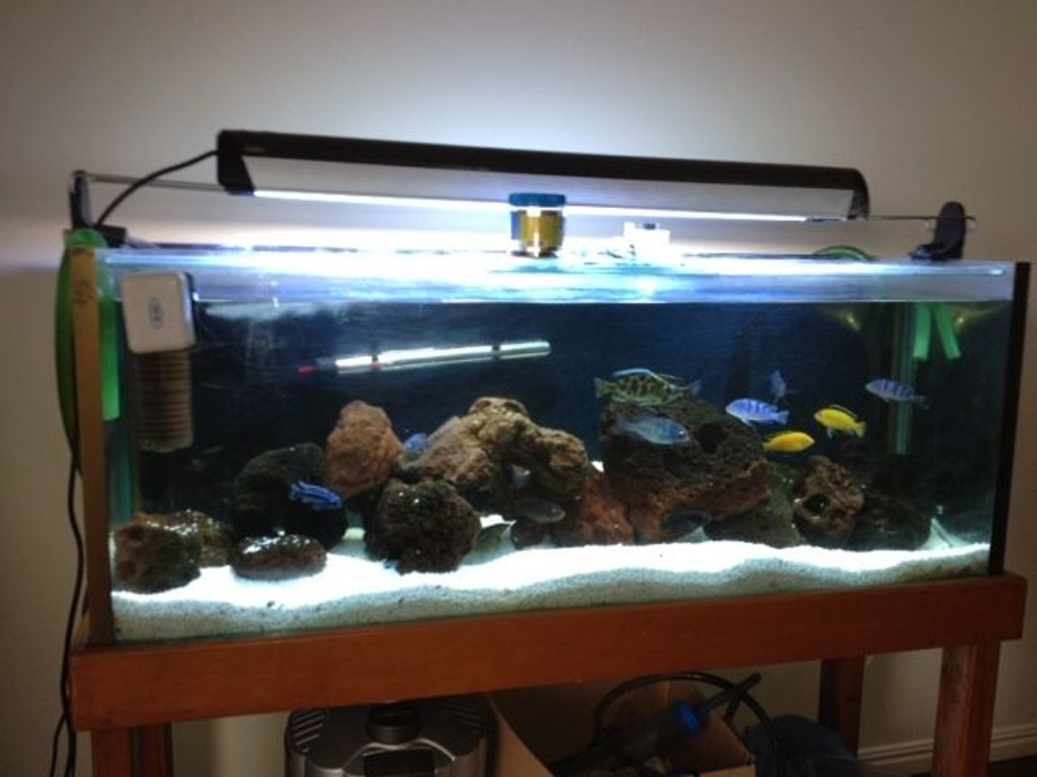 250 gallons freshwater fish tank (mostly fish and non-living decorations) - mY sICK TANK