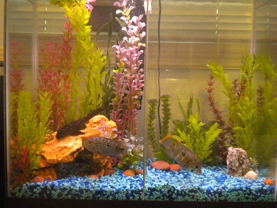 25 gallons freshwater fish tank (mostly fish and non-living decorations) - 25 Gal.