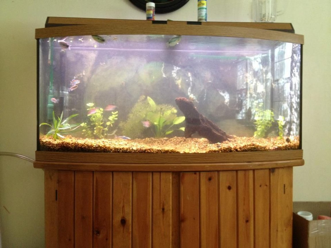 72 gallons freshwater fish tank (mostly fish and non-living decorations) - 72 bow