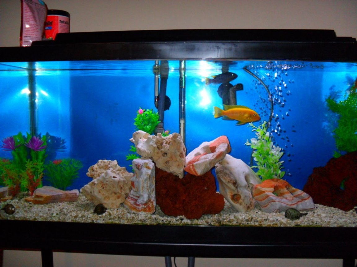 30 gallons freshwater fish tank (mostly fish and non-living decorations) - African 30g