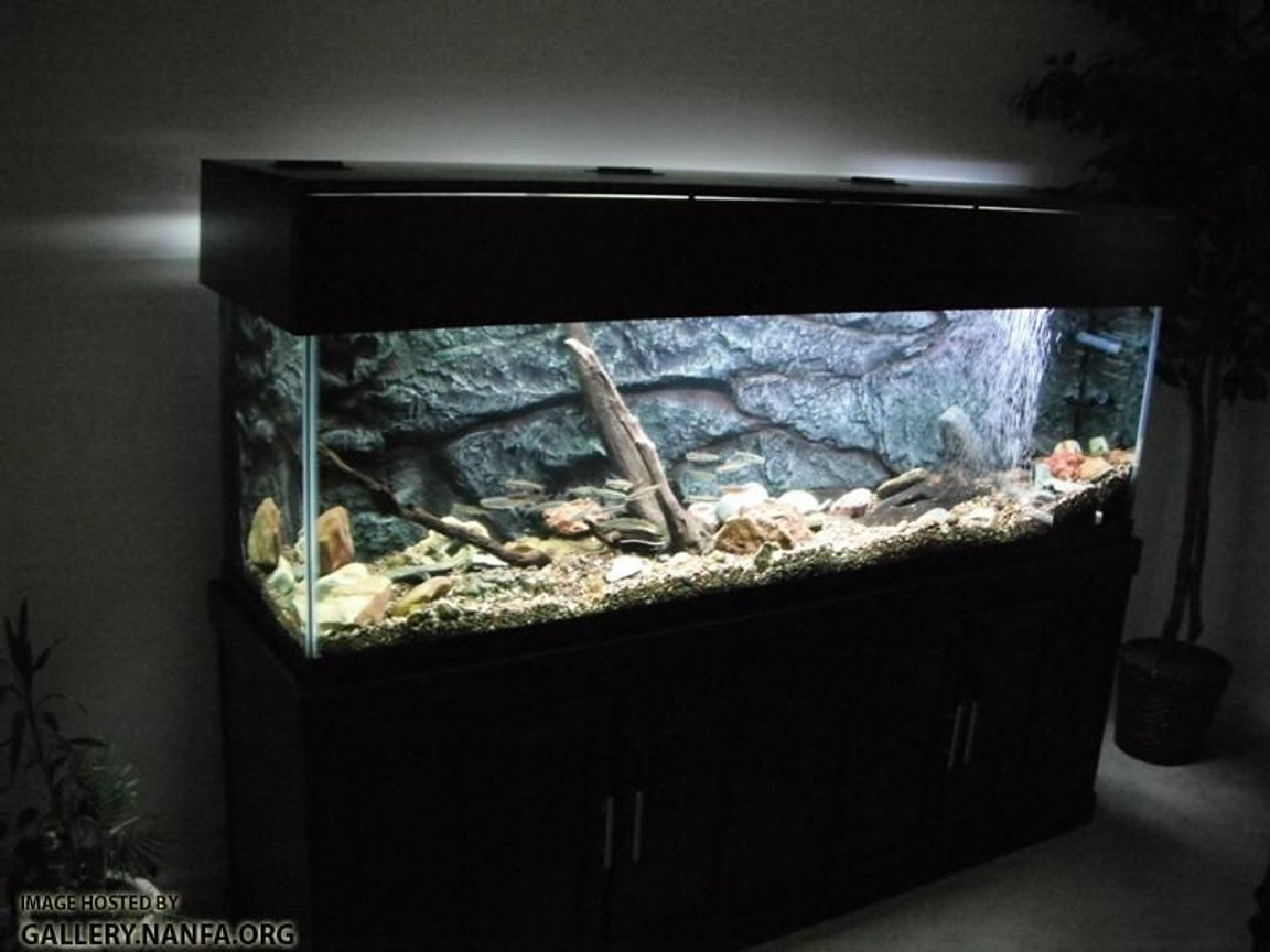 125 gallons freshwater fish tank (mostly fish and non-living decorations) - Full Aquarium Setup
