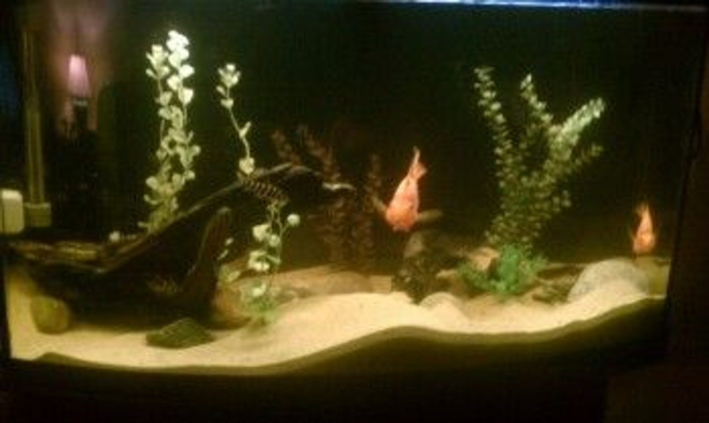 55 gallons freshwater fish tank (mostly fish and non-living decorations) - enjoy