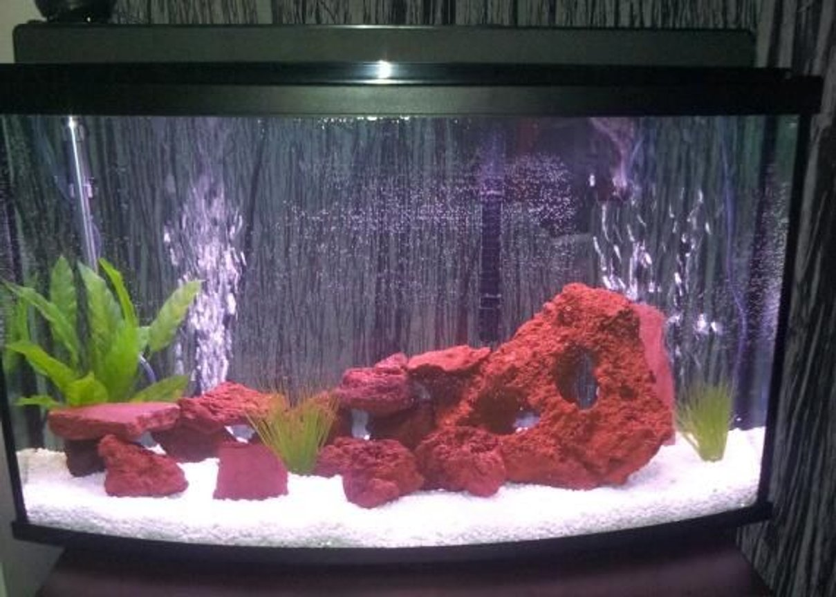 45 gallons freshwater fish tank (mostly fish and non-living decorations) - 45 gallon with africans cichlids