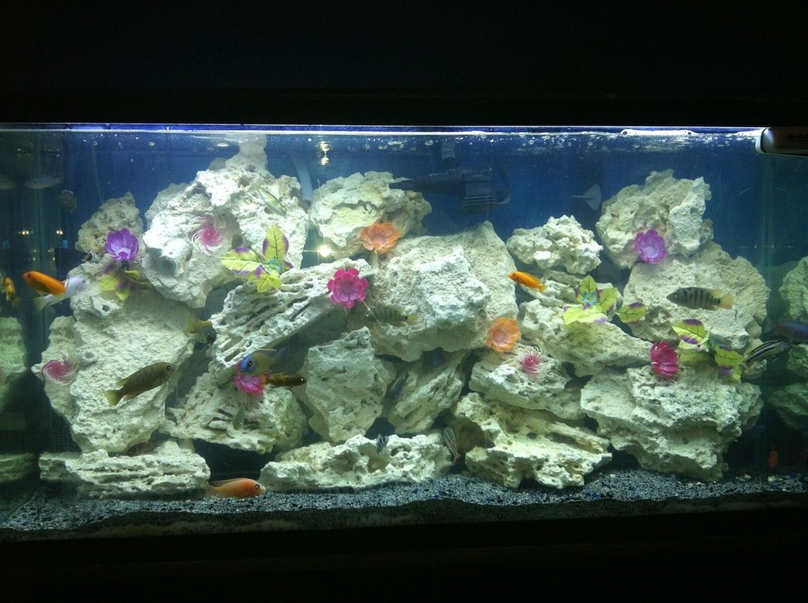 60 gallons freshwater fish tank (mostly fish and non-living decorations) - it speeks for it self.