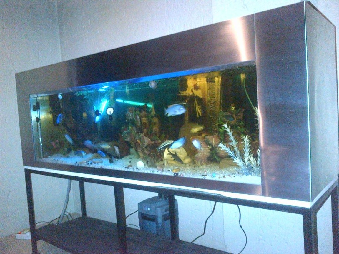 132 gallons freshwater fish tank (mostly fish and non-living decorations) - 6 Foot Stainless Steel Tank, 500 Litres, Malawi's. South Africa