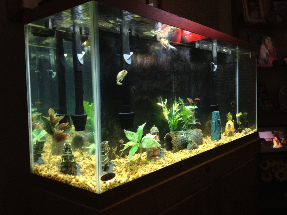 55 gallons freshwater fish tank (mostly fish and non-living decorations) - 55 gallon fish only tank.