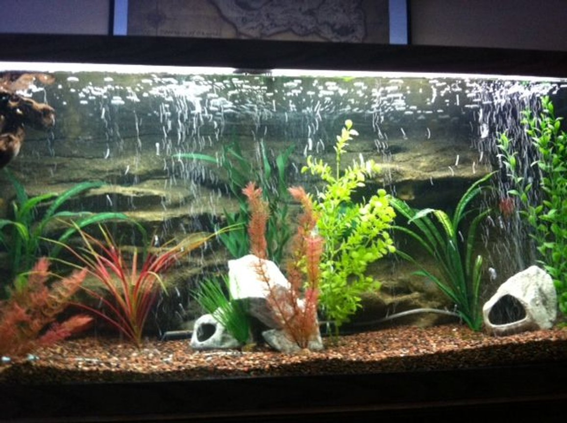 75 gallons freshwater fish tank (mostly fish and non-living decorations)