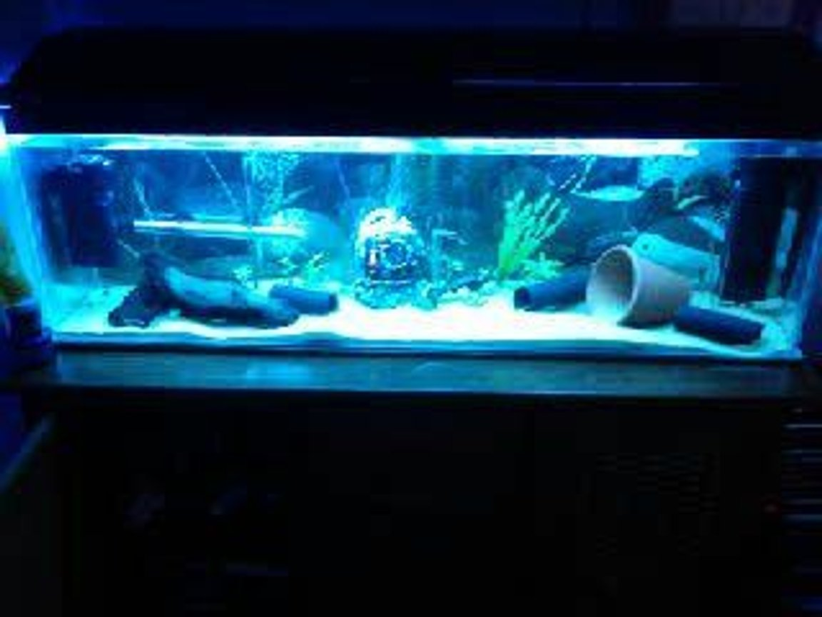 freshwater fish tank (mostly fish and non-living decorations) - my fish tank :D