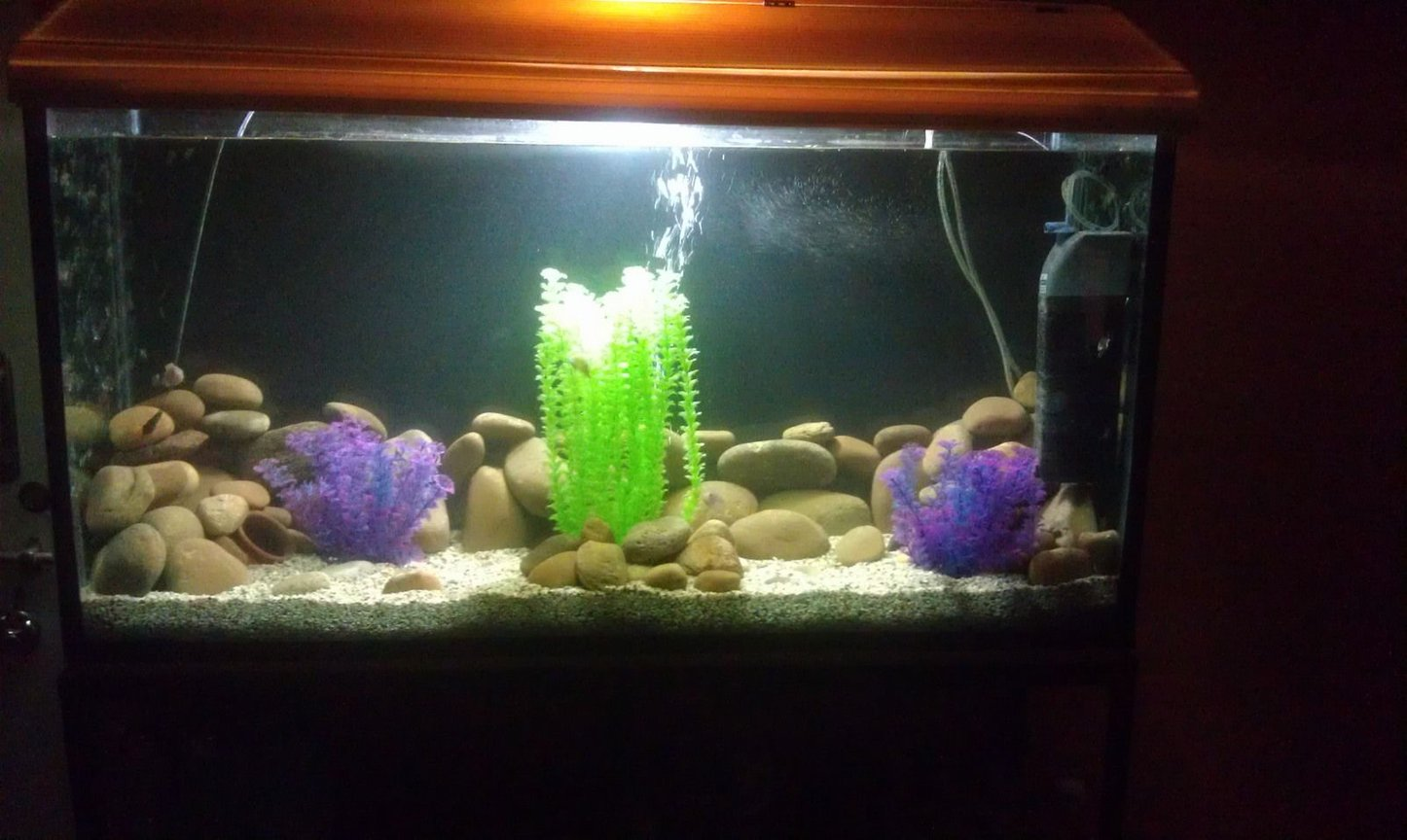 75 gallons freshwater fish tank (mostly fish and non-living decorations) - Chichlids Community Tank