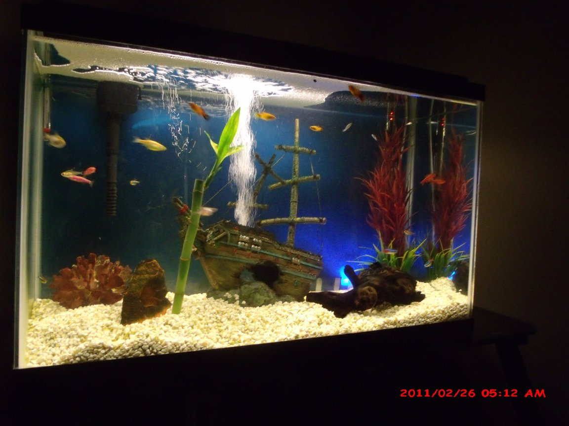 30 gallons freshwater fish tank (mostly fish and non-living decorations) - my 2 year old 30 gallon tank