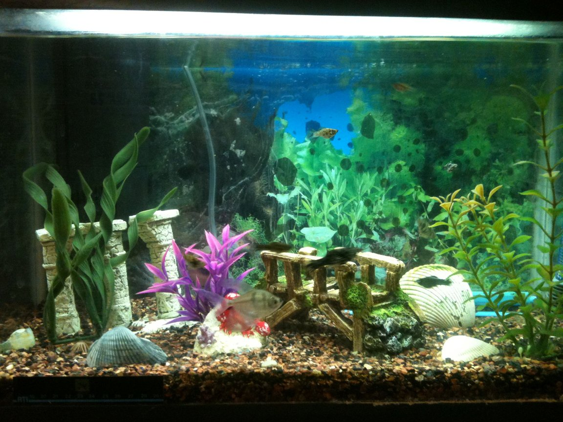 10 gallons freshwater fish tank (mostly fish and non-living decorations) - 10 Gallons of Paradise. 9 baby mollys and a couple black-skirt tetras. Hard to get a solid pic when all the babies are zipping around!