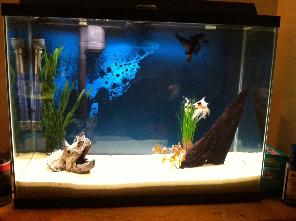 55 gallons freshwater fish tank (mostly fish and non-living decorations) - 40g goldfish tank