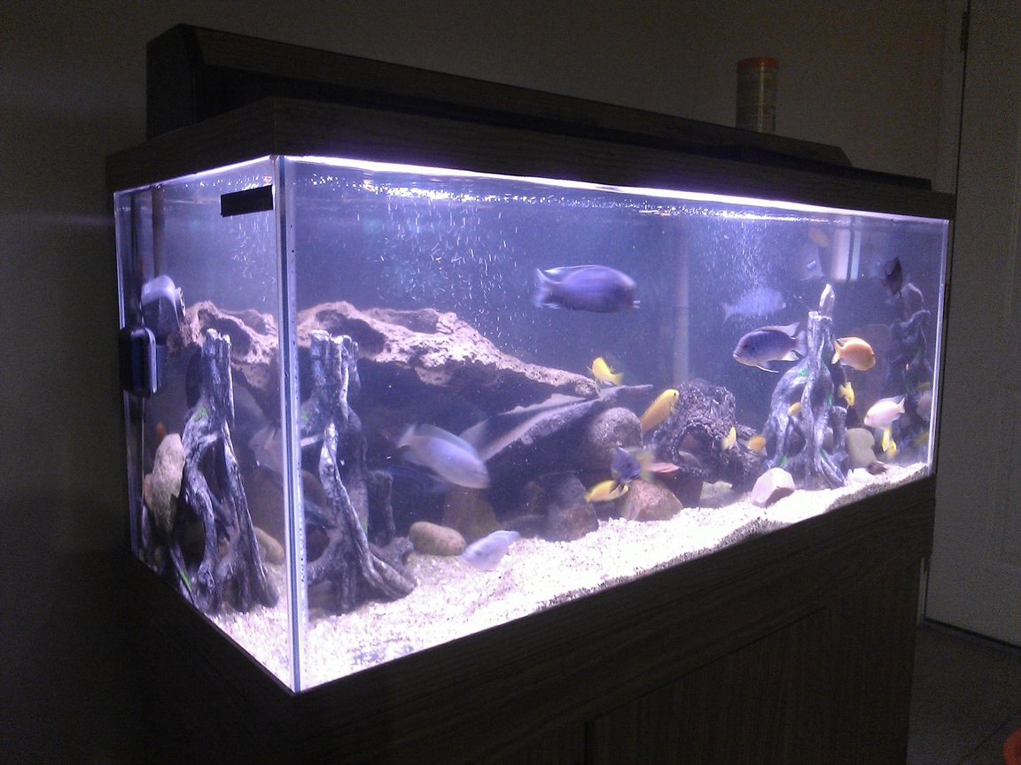 20 gallons freshwater fish tank (mostly fish and non-living decorations) - about 75 gallons with lots of mix cichlids 4 blue colbalt 2 red zebra 7 electric yellow 3 blue dolphins 3 red jewels a few different peacocks small electriblues