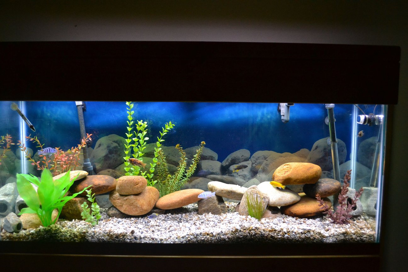 55 gallons freshwater fish tank (mostly fish and non-living decorations) - 55 gal Malawi