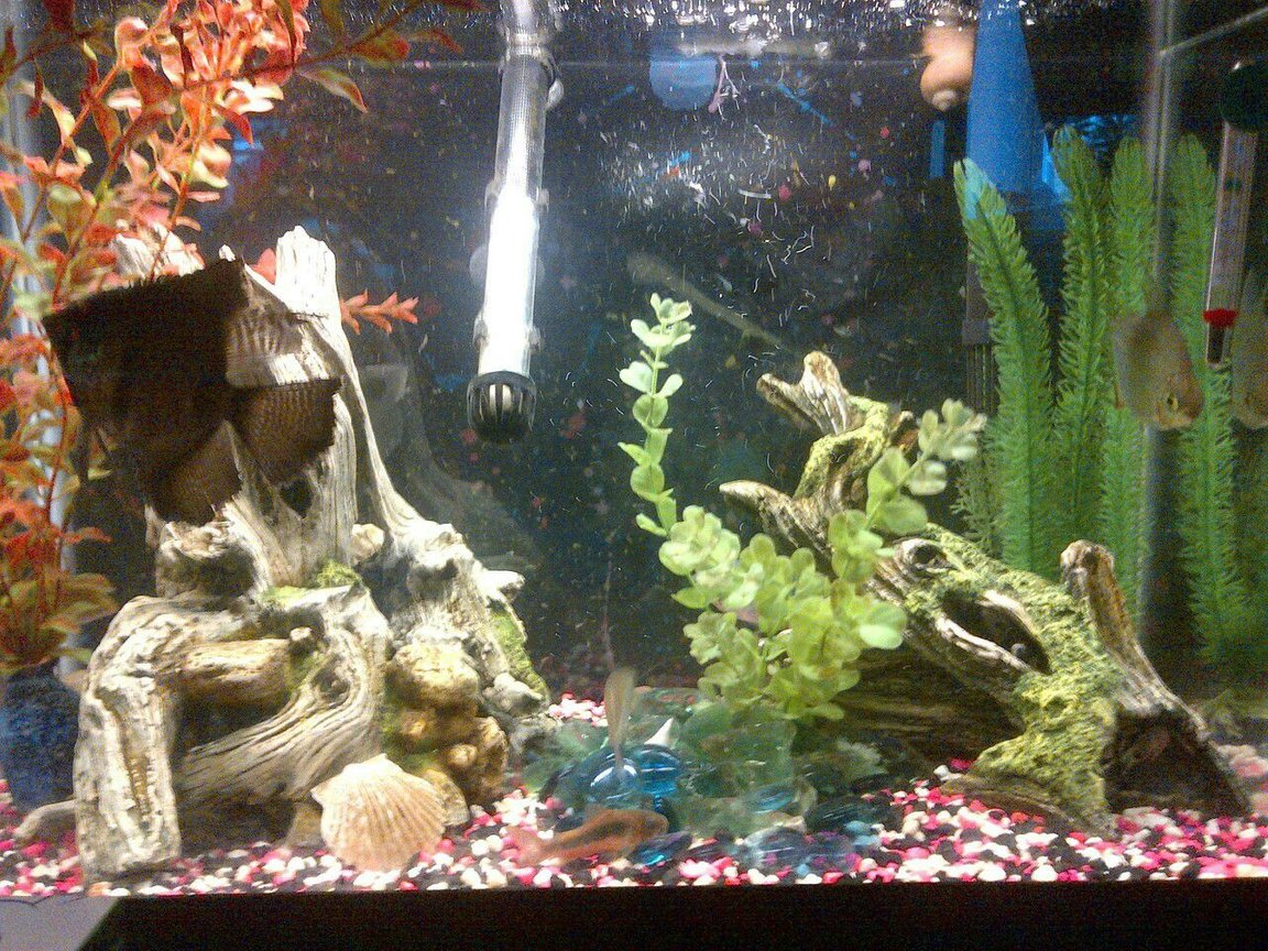 20 gallons freshwater fish tank (mostly fish and non-living decorations) - my 20 gallon, tall