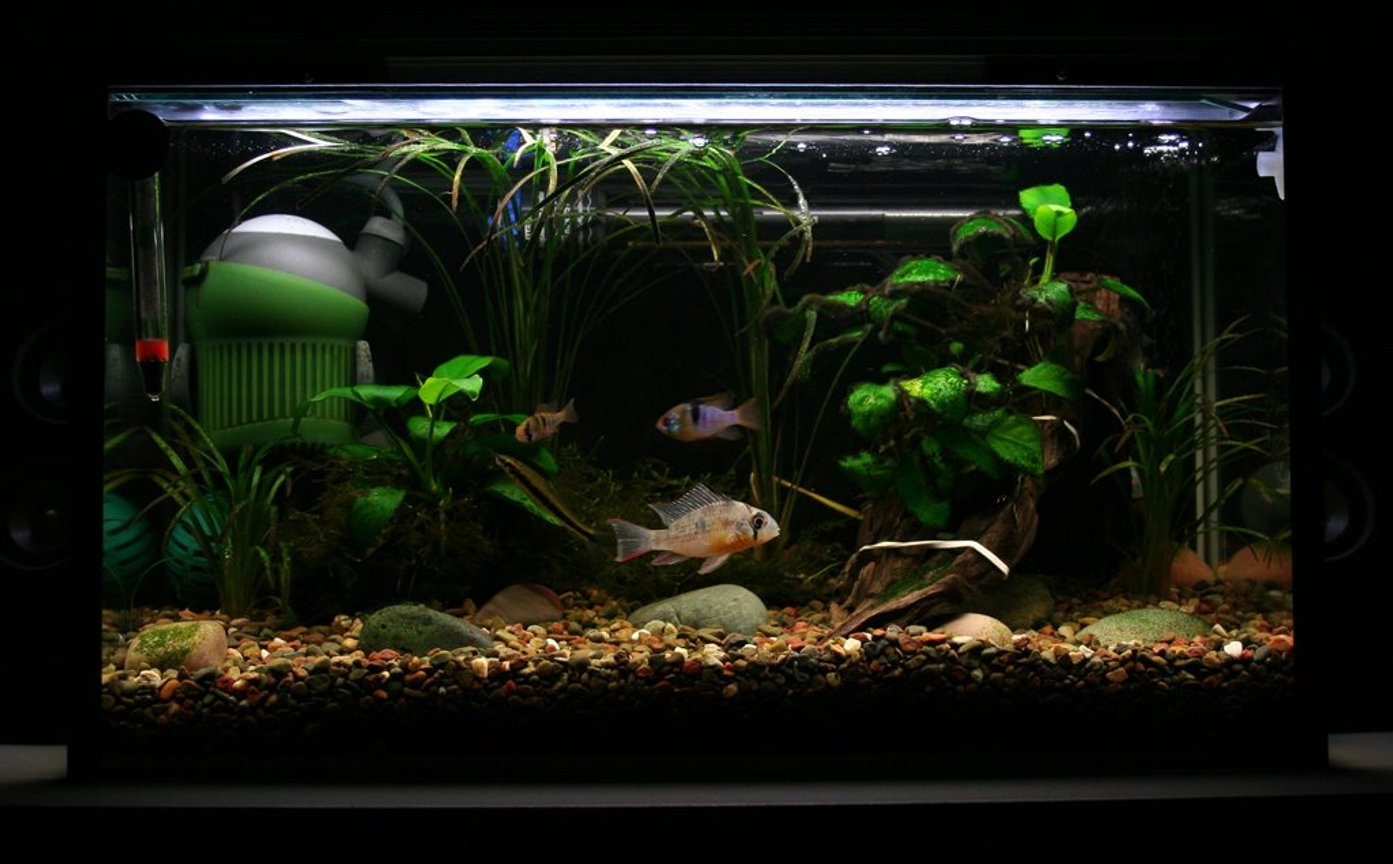 5 gallons freshwater fish tank (mostly fish and non-living decorations) - tank 3