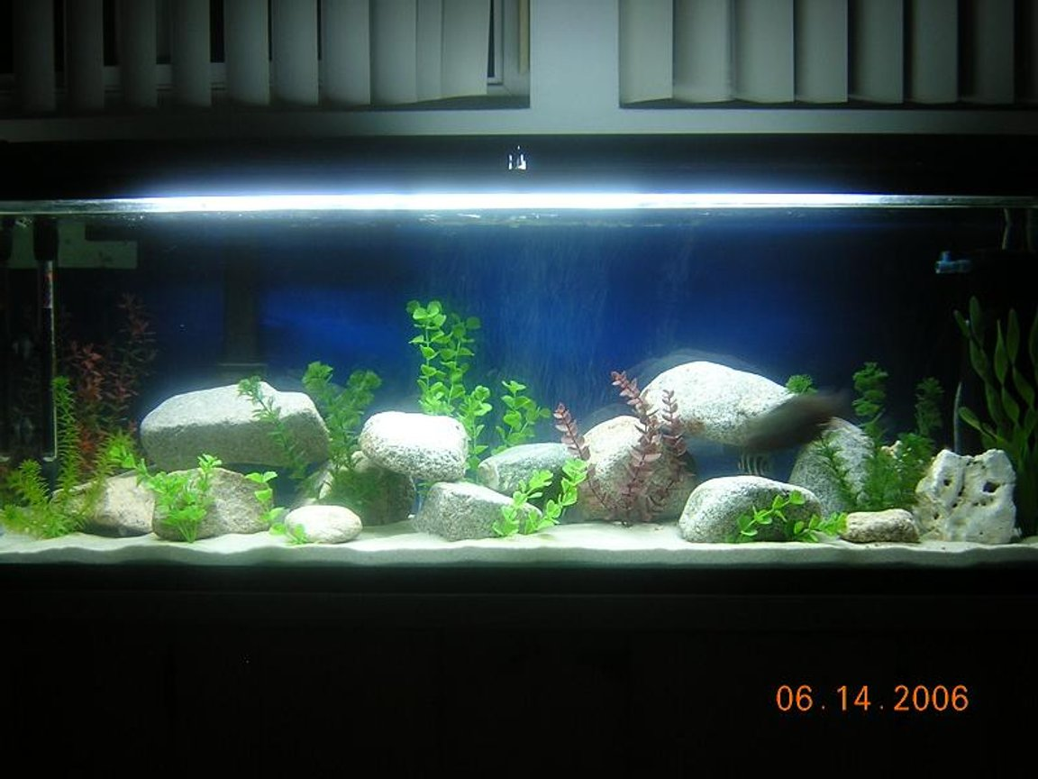 80 gallons freshwater fish tank (mostly fish and non-living decorations) - 80 Gallon