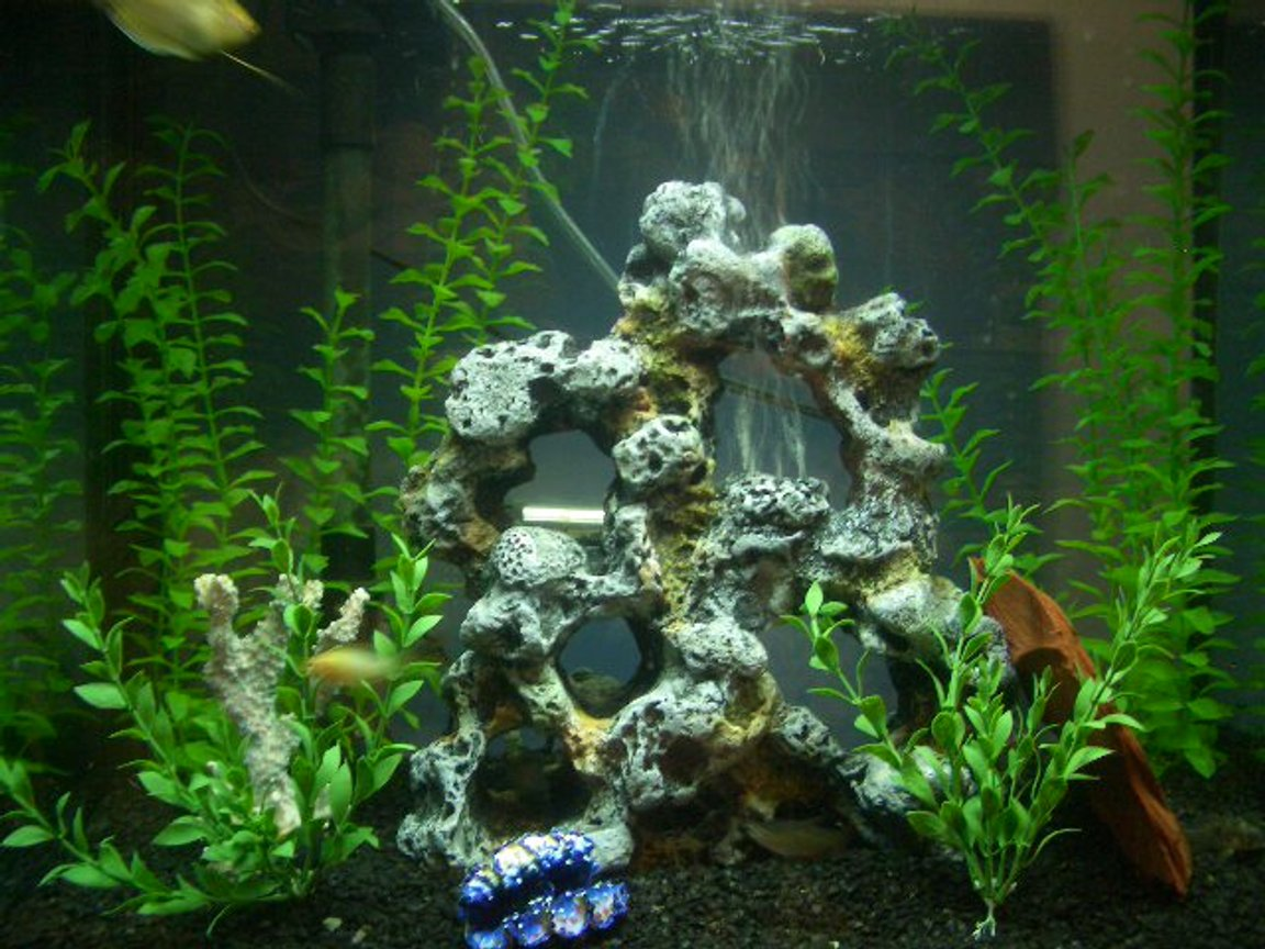 28 gallons freshwater fish tank (mostly fish and non-living decorations) - my tank