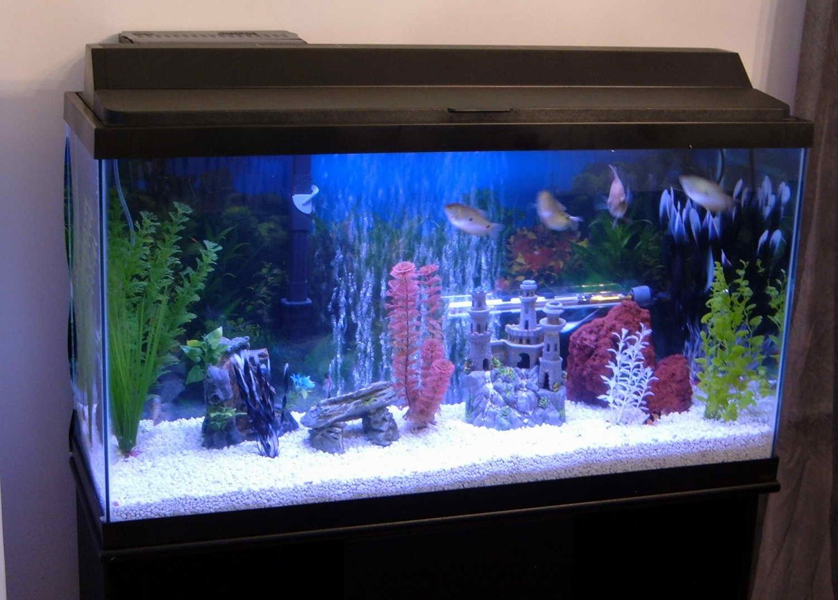38 gallons freshwater fish tank (mostly fish and non-living decorations) - The Tank!
