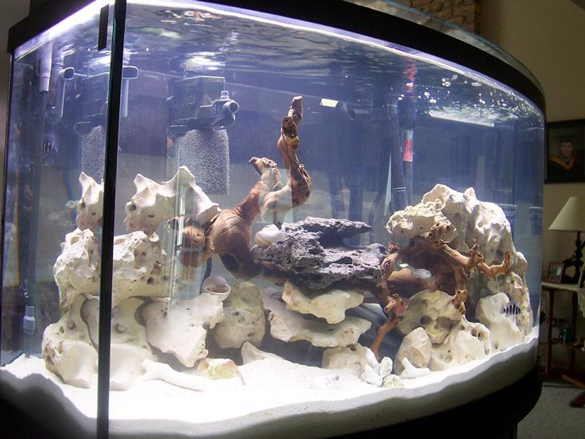 46 gallons freshwater fish tank (mostly fish and non-living decorations) - 46 GAL aGA BOWFRONT