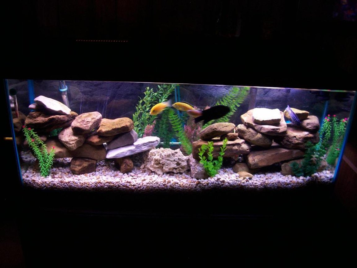 55 gallons freshwater fish tank (mostly fish and non-living decorations) - this is my cichlid tank with plenty of river rocks and fake plants. I have also built homemade moon lights for it and the fish seem to like it because they breed well.