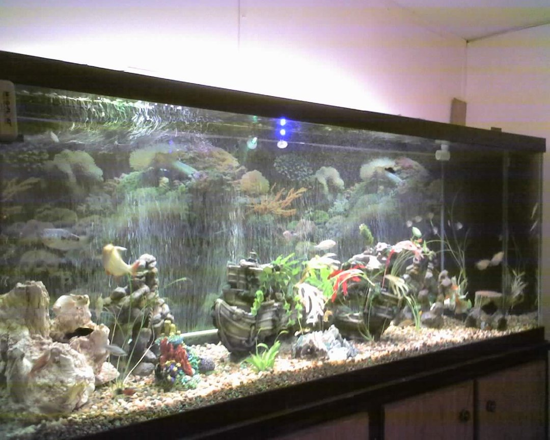 150 gallons freshwater fish tank (mostly fish and non-living decorations) - this is my 150Gal. tank im still working on it