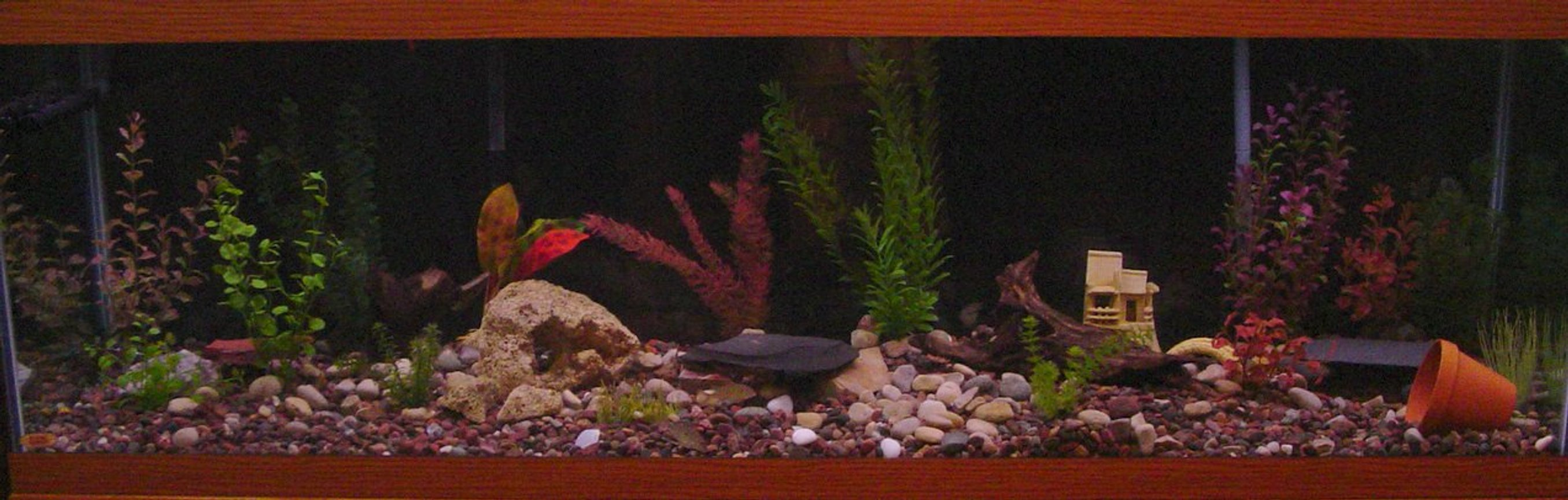 125 gallons freshwater fish tank (mostly fish and non-living decorations) - my 125 gallon tank.