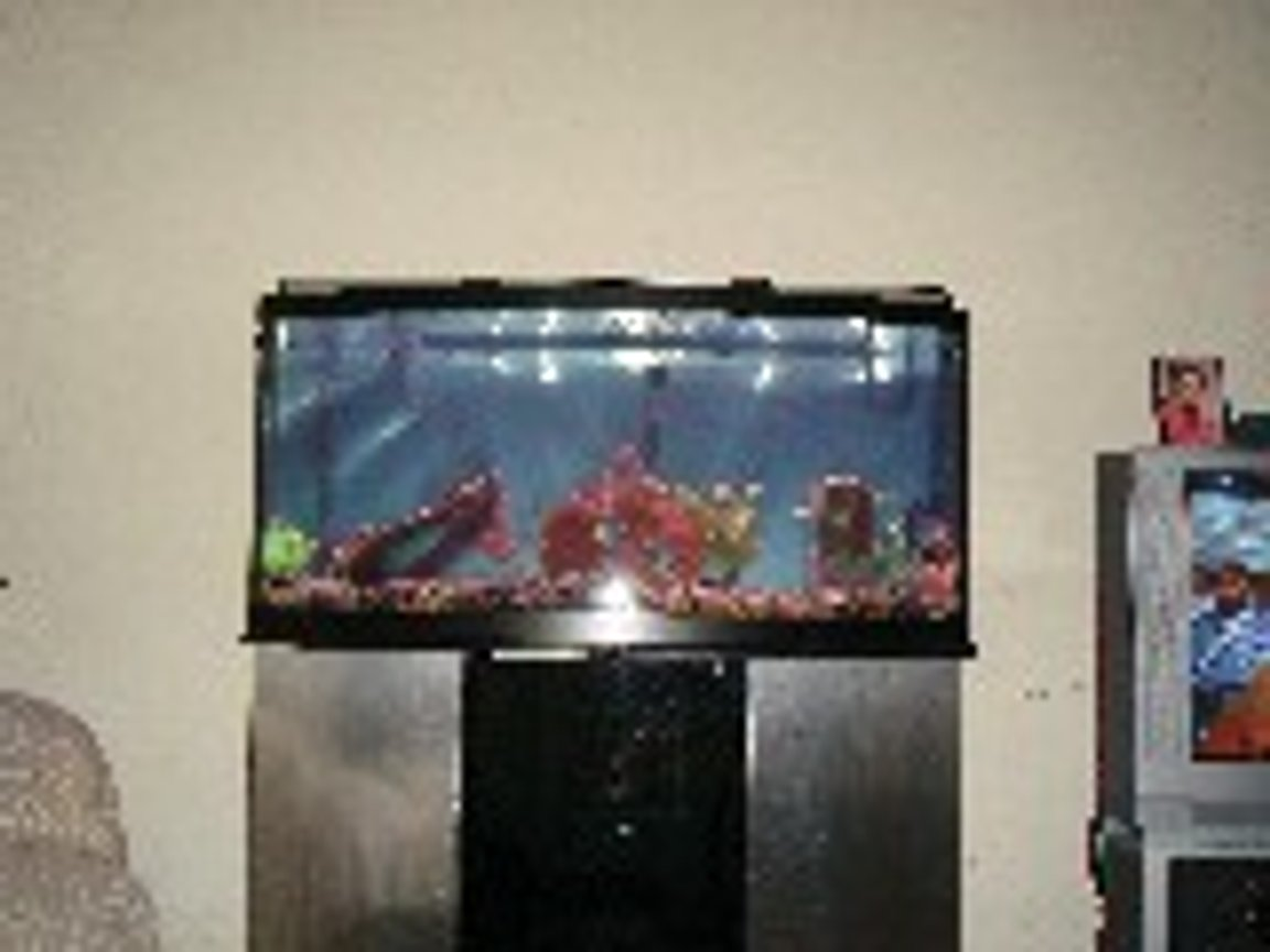 72 gallons freshwater fish tank (mostly fish and non-living decorations) - 72 gallong bowfront